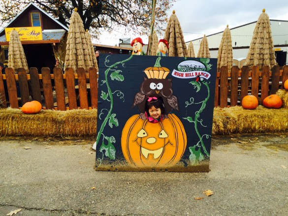 Roxy with her head inside the pumpkin at High Hill Ranch