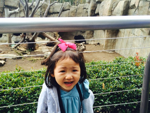 Roxy with a black bear in the background at the San Diego Zoo